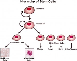 cancer-basics-1-initiation-progression-stem-cell