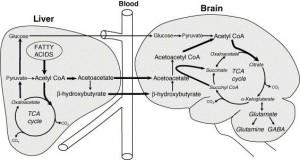brain-ketosis