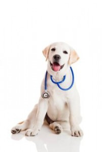 medical-dogs-stethoscope