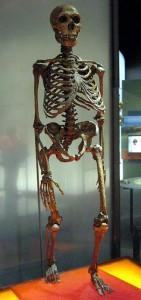 neanderthal-skeleton