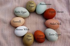 eggs-colored