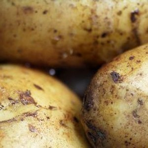 potato-close-up
