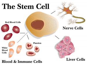 stroke-stem_cell_all