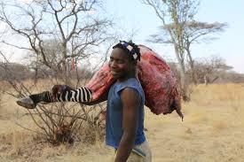 paleo-zebra